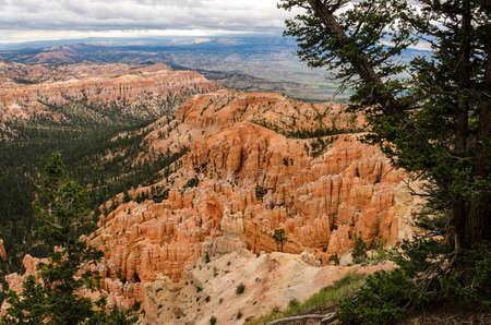 hoodoos: Hoodoos with pine trees at Bryce Canyon National Park in Utah. Stock Photo