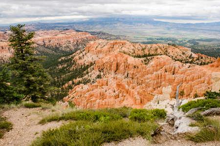hoodoos: Hoodoos with pine trees and chipmunk at Bryce Canyon National Park in Utah. Stock Photo