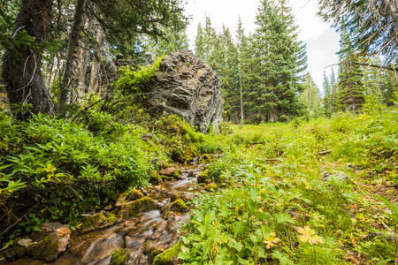 wasatch: Spring or stream in the Wasatch National Forest Albion Basin in Utah, by Salt Lake City