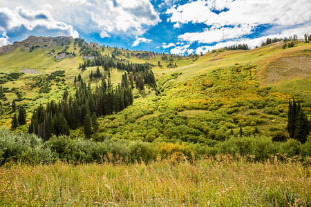 wasatch: Albion Basin landscape scenery with alpine meadows photographed during summer.
