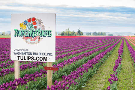 family owned: Mount Vernon, USA - April 6, 2016: Roozengarde sign at the Skagit Tulip Festival with purple and red fields in Washington state