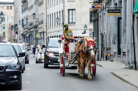 guided: Montreal, Canada - July 26, 2014: Tour guide on road in horse carriage buggy in old town city