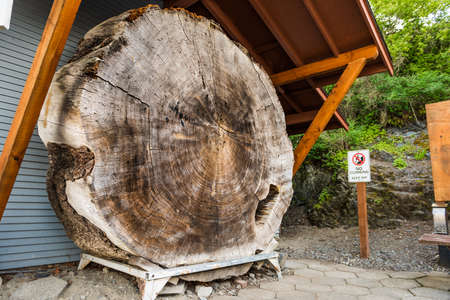 conner: Large cedar tree trunk slice in La Conner, Washington on display with sign
