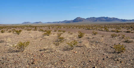 chaparral: Many small chapparal trees in Death Valley desert in California Stock Photo