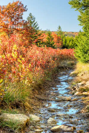 allegheny: Dolly sods muddy wet trail path during autumn with red blueberry bushes in West Virginia