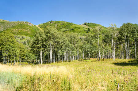 wasatch: Meadow and forest with hills in in Utahs Wasatch Range Stock Photo