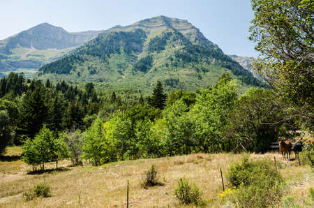 wasatch: Meadow and forest with hills in Utahs Wasatch Range with two horses