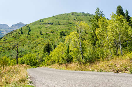 wasatch: Road with forest and hills in Utahs Wasatch Range