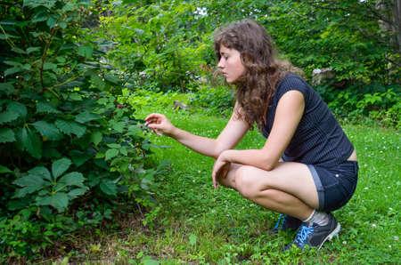black raspberries: Young woman picking wild black raspberries from bush Stock Photo