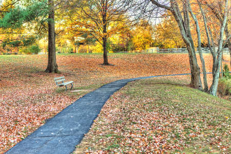 empedrado: Sidewalk paved path with bench in field of many fallen leaves in autumn