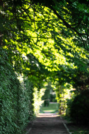 Blurred image of tree tunnel with green leaves and sunshine.