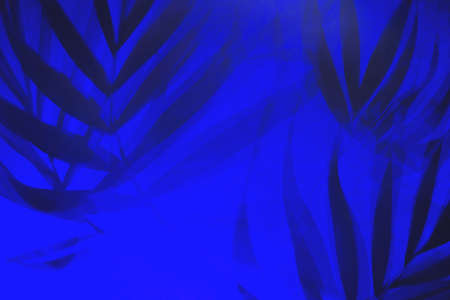 Tropical palm leaves shadows in blue light. Stock Photo