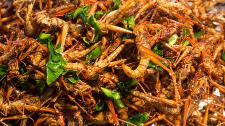 bug's: fried bugs