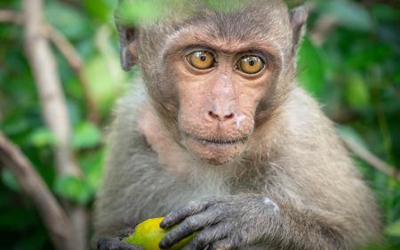 Monkey, old, baby, baby, smiling, camera, monkey at the temple, Khao Takiab tourist friendly,monkey rim light,Reflective Monkey Hair