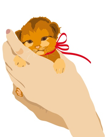 kitten, hands,ginger , background photo