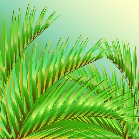 palm oil: palm leaves vector Illustration