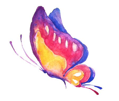 butterfly, watercolor photo