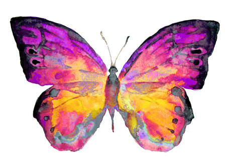 Mariposa Foto de archivo - 22181923