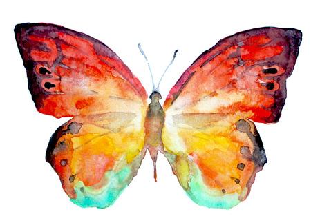 Mariposa Foto de archivo - 22181925