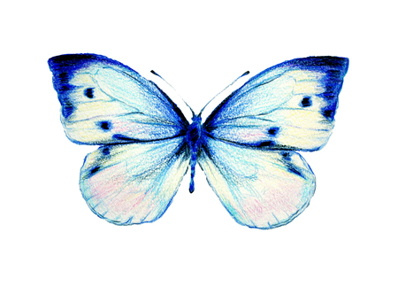 blue butterfly: it is drawn Stock Photo