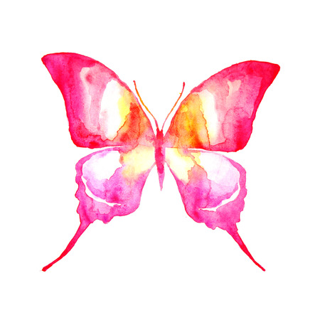 pink butterfly: butterfly,watercolor design