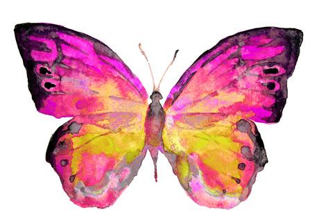 butterflies design Stock Photo