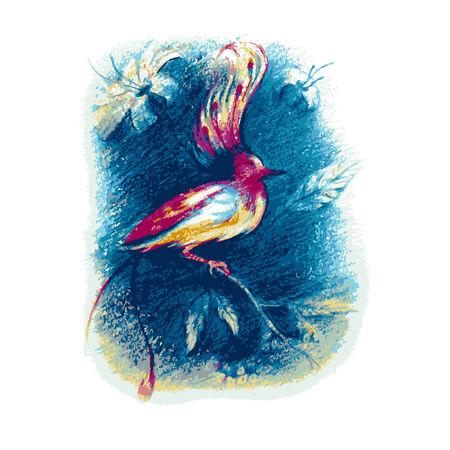 birds of paradise: beautiful bird