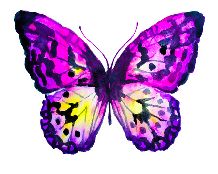 butterflies design Stock Photo