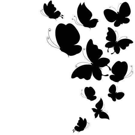 butterflies design photo