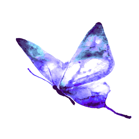 a watercolor butterfly. 矢量图像