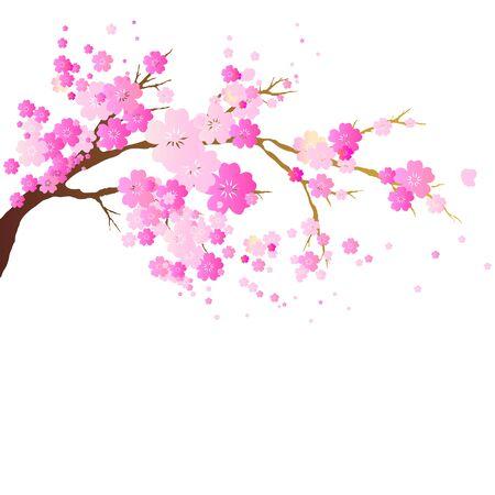 cherry branch: cherry branch Illustration