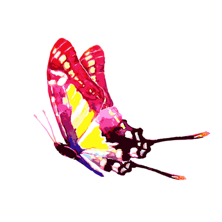 butterfly,watercolor, isolated on a white Ilustração