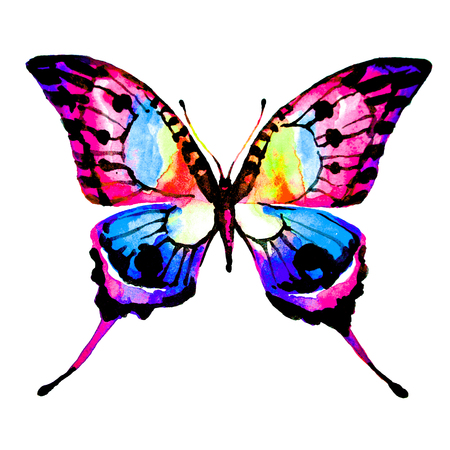 butterfly,watercolor, isolated on a white Imagens