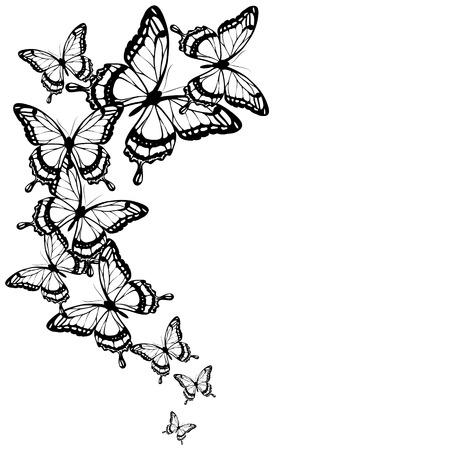 black butterflies,isolated on a white Ilustração