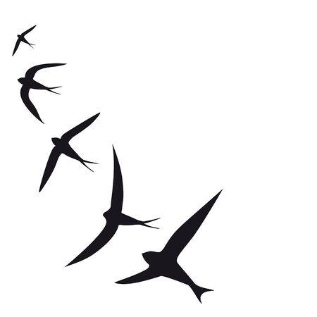 bel oiseau, silhouette noire, sur un fond blanc