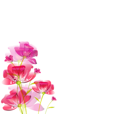 beautiful pink flowers , on a white Illustration