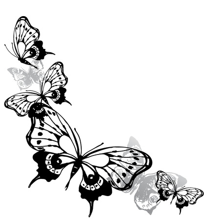 black butterfly on a white