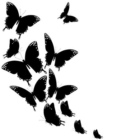 Farfalla nera, isolato su un bianco Archivio Fotografico - 83284324