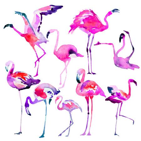 Beautiful watercolor flamingos, isolaned on a white. Big set. Stock Photo