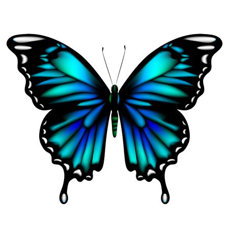 Mooie blauwe vlinders, geïsoleerd op een wit