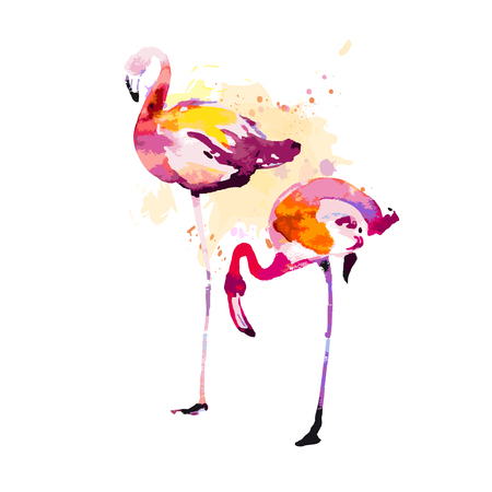 Beautiful watercolor flamingos, isolaned on a white. Big set. 向量圖像