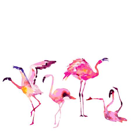 Beautiful flamingos, isolaned on a white. Big set. Illustration