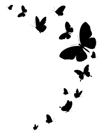 butterfly isolated: black butterfly, isolated on a white