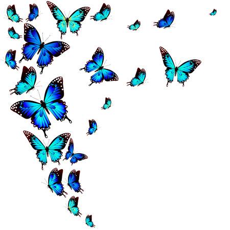 아름 다운 푸른 나비, 흰색에 격리