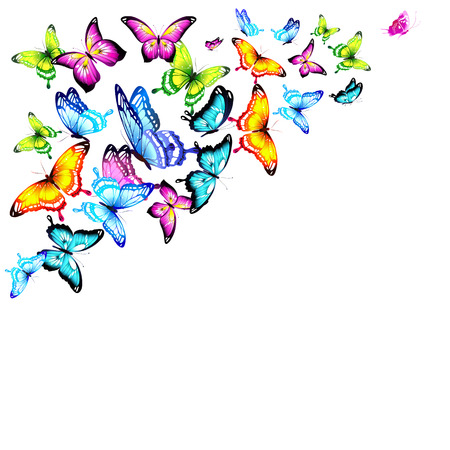 beautiful color butterflies,set, isolated  on a white Illustration