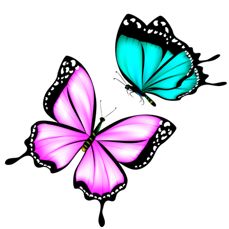 beautiful pink,blue butterflies, isolated  on a white Illustration
