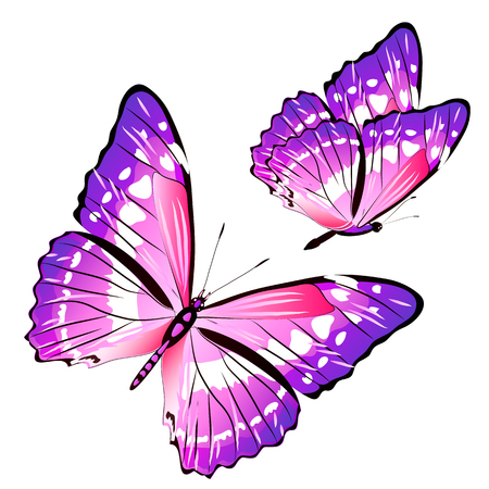 Beautiful pink butterflies, isolated on a white Illustration