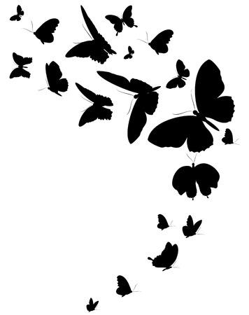 schwarzer Schmetterling, isoliert auf einem weißen