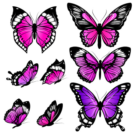 beautiful pink butterflies, isolated on a white background