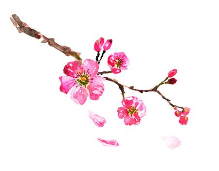 sakura tree; watercolor, cherry bloom Stock Photo